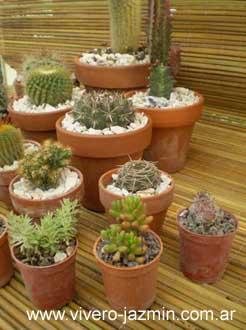 Plantas de exterior for Cactus de exterior